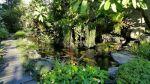 Hồ cá Koi Bướm đẹp nhất Việt Nam