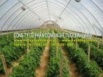 Nhà màng nông nghiệp, nhà màng Israel, chi phí làm nhà màng công nghệ cao